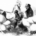 Cochin und Houdan von 1867