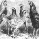 Malaien aus dem Jahre 1865
