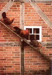 Westfälische Totleger auf der Hühnerleiter einer Scheune, erbaut 1695; Westfälisches Freilichtmuseum Detmold, Foto: Rolf Siebrasse