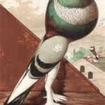 Englischer Kröpfer, von Ludlow, um 1875, Archiv Detering